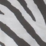 zebra Preto e branco